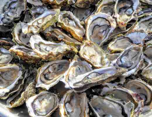 Bordeaux River Cruise Shore Excurions - Fresh oysters from the Bay of Arachon