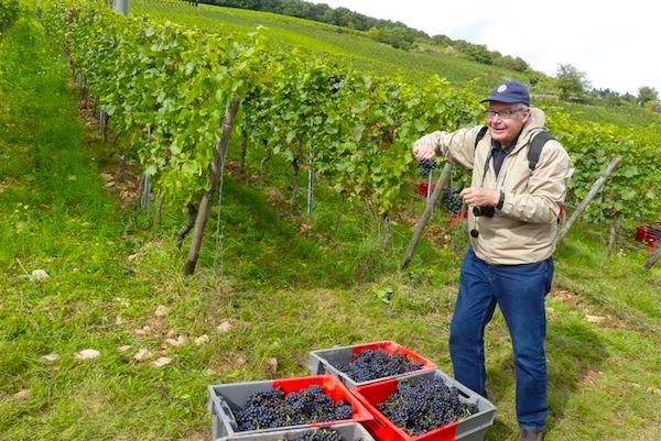 Grapes galore in Rudesheim