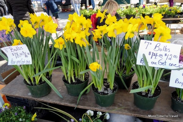 Spring daffodils at Pleasantville Farmers Market
