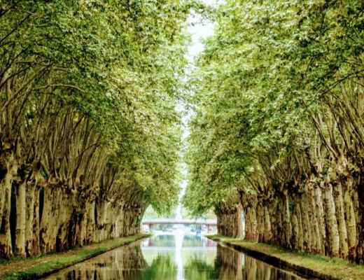 Barge Cruise through Alsace & Lorraine: Avenue of trees along the canal