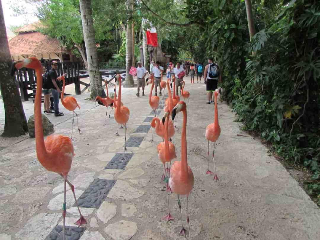 The daily flamingo parade at XCaret