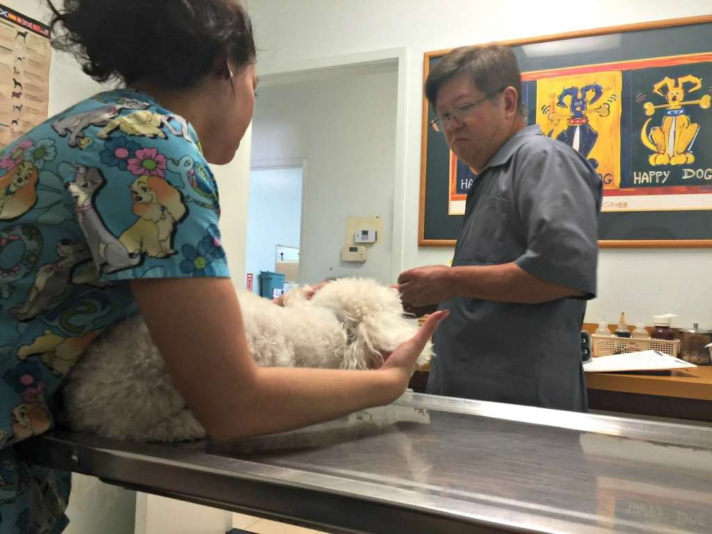 Prevention tips for fleas and heartworms SentinelSpectrum
