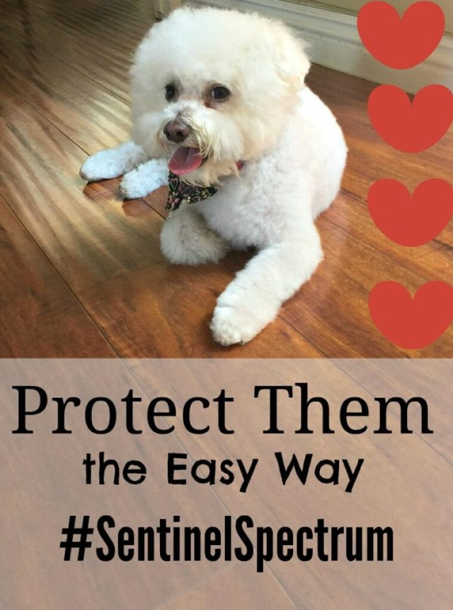 Are you looking for year round protection for your dog? You can do it the easy way with one product that protects against fleas, heartworm and parasites.