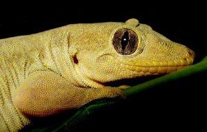 94b09df0-efa2-11e3-9895-e33ab137299f_Gecko-Smile