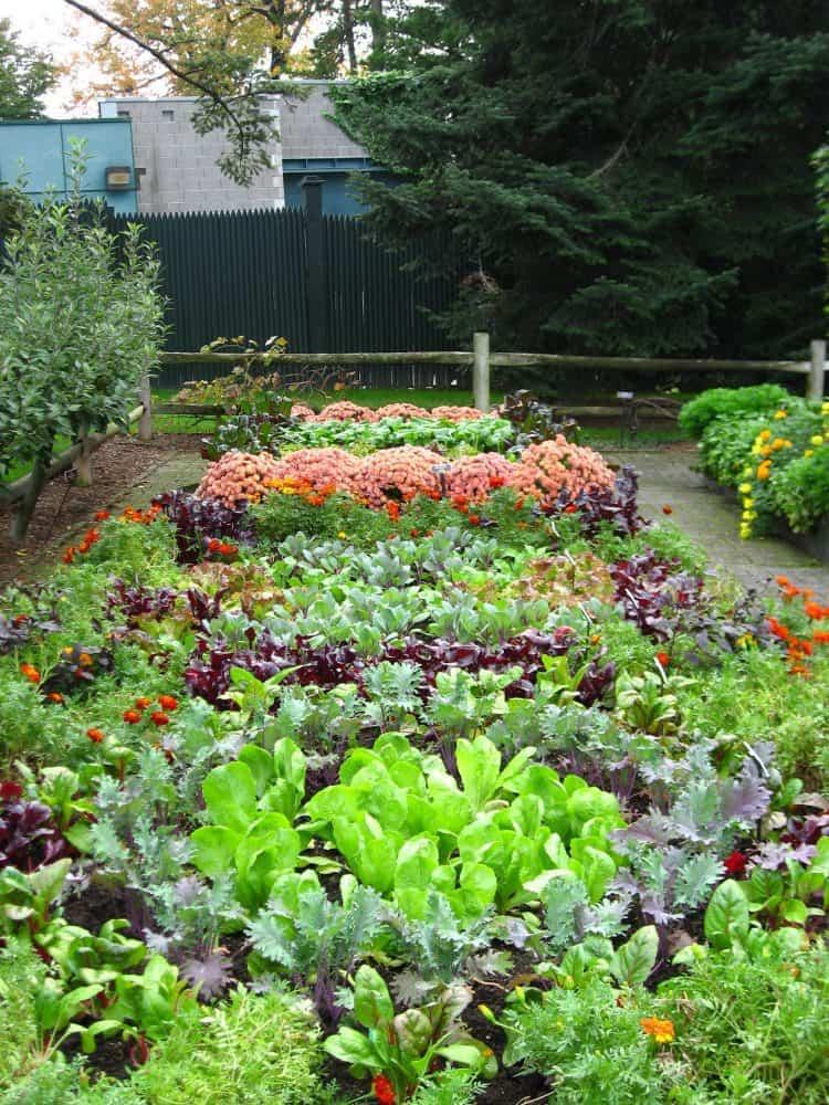 title   Vegetable Garden Ideas