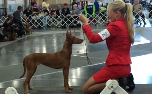 dog-dog-othershow-redsuit