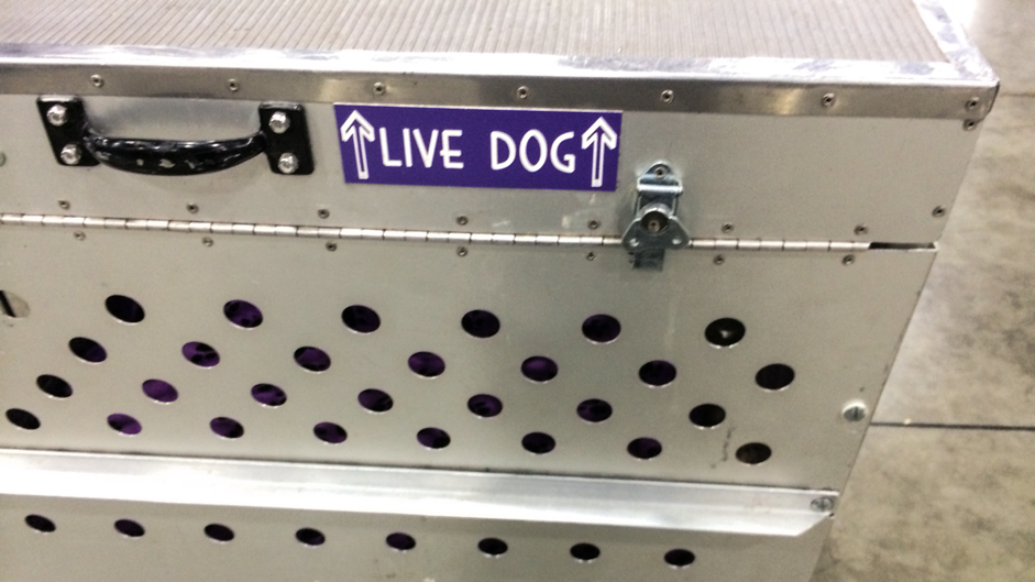 dog-livedog