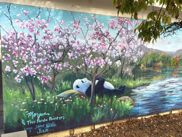 Decorative Mural with Asia Landscape with Panda and Cherry Blossom Trees