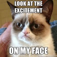 excitement cat