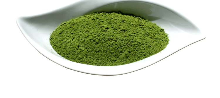 Important Facts about the Moringa Leaves Powder to Note