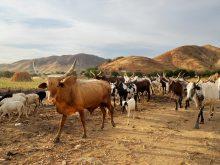 Morija projet agricole