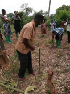 Morija Agroforesterie