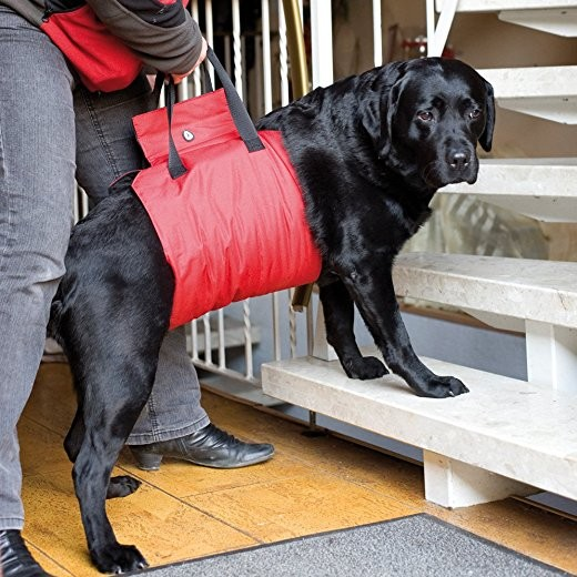 Harnais de soutien antérieur pour chiens handicapés ou à mobilité réduite