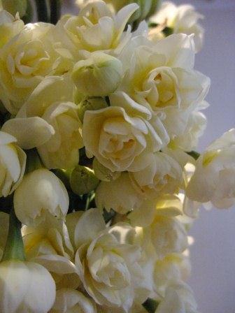 白いアイリスの花