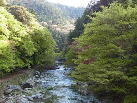 京都・新緑の清滝
