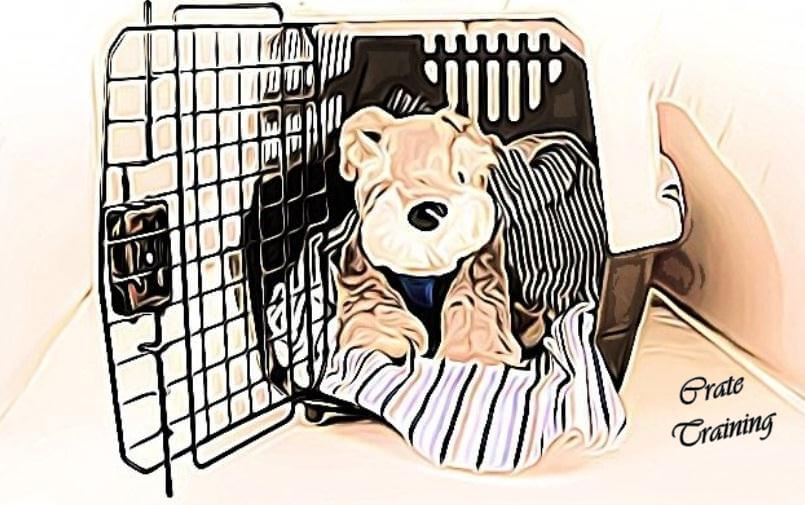 best crate for morkie dog, best morkie dog crate, small dog crate