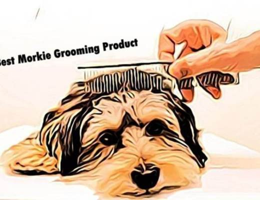 best morkie grooming products, Dogs Grooming product, best grooming product