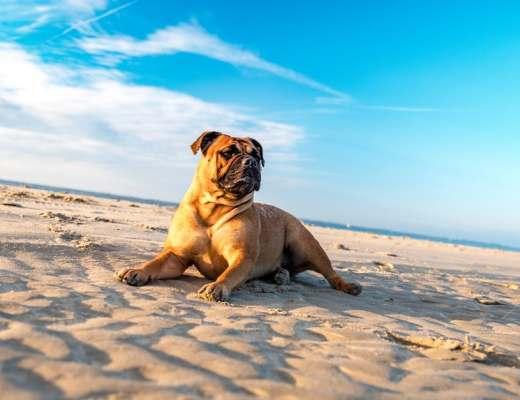 dog breeds, top dog breeds, most popular dogs