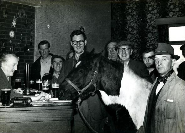 Harold Lacey's horse drinking beer in the bar at The Old White Bear, Tingley