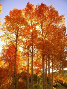 autumn-trees-912391-gallery