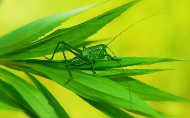 La start up che mette in tavola gli insetti
