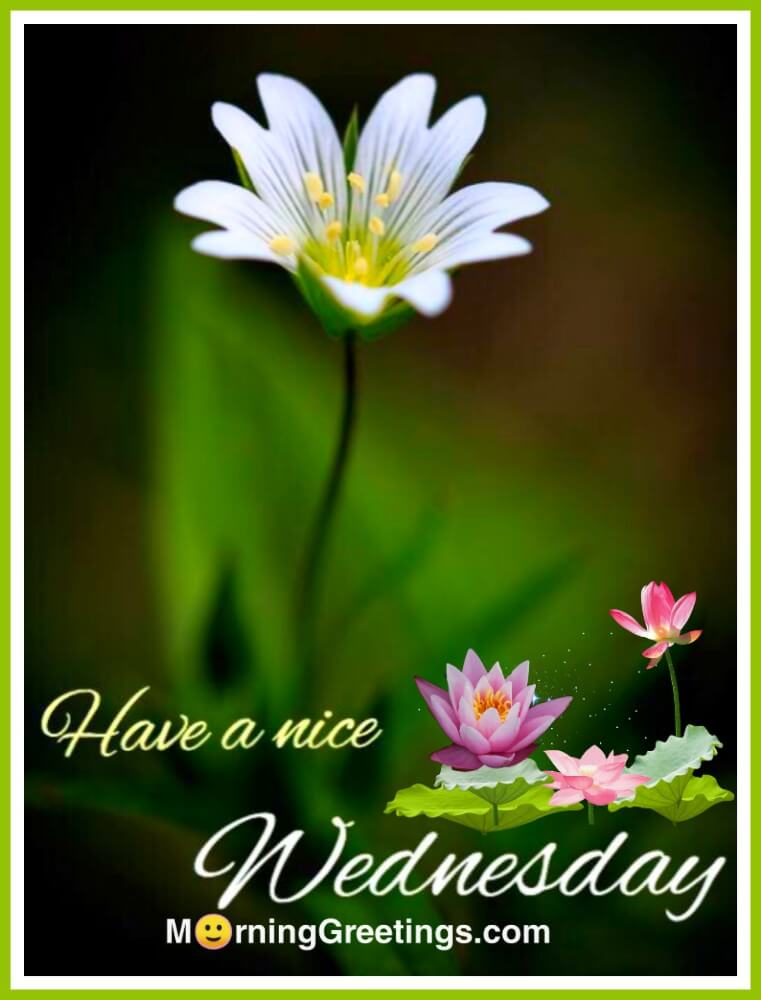 18 Wonderful Wednesday Greetings Morning Greetings Morning Wishes