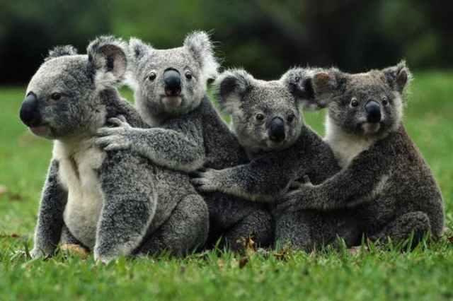 Australia sanctuary