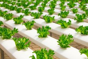 The Benefits of Hydroponic Farming