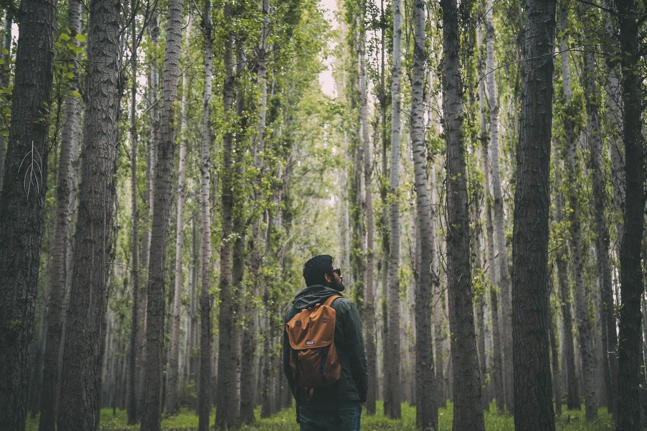 Forest Bathing – The New Antidepressant