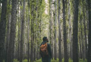 Forest Bathing – The New Antidepressant