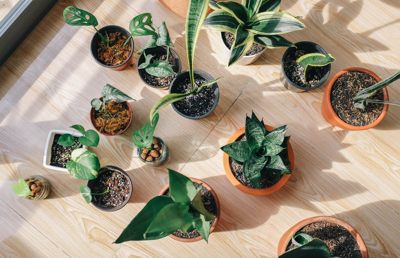 Indoor Plants You Can Get On Amazon