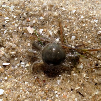 Crabs in the sand by Mornington Sea Glass