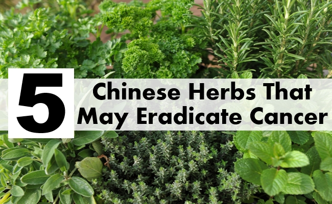 Chinese Herbs That May Eradicate Cancer