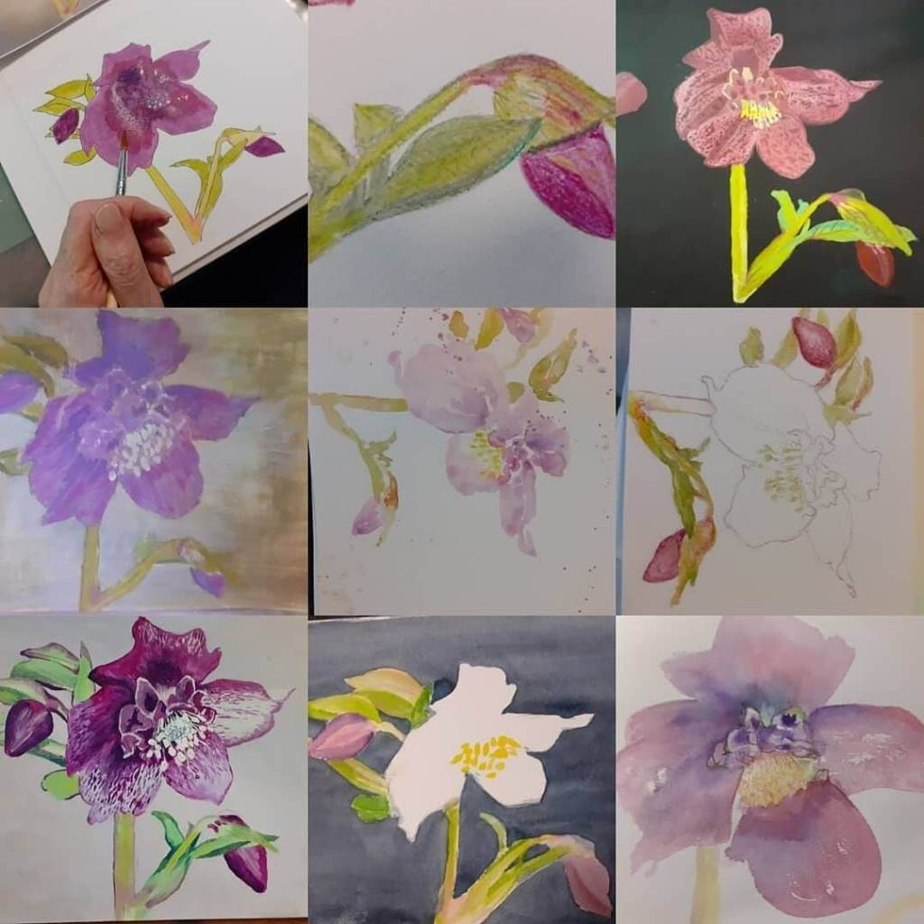Drawings and paintings by students on Claire Lucas's Botanical Art Classes at Morrab Library