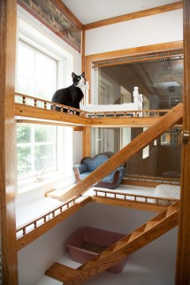 Luxury Cat Boarding Morris Animal Inn - Morristown Nj