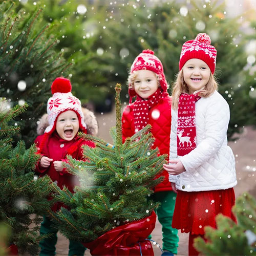 Meet Santa, roast S'mores, ride our hayrides and more during our Christmas Village Event at Mortimer Farms.