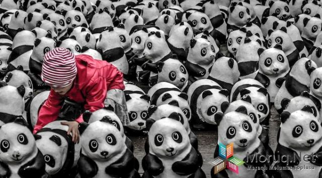 Playing with Pandas - 2013-11-04_228127_people.jpg