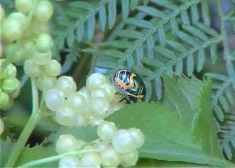 200202_beetle