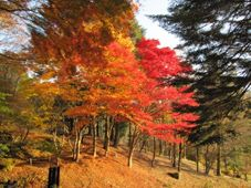 Rokkō Alpine Botanical Garden Witness The Colours Of Autumn