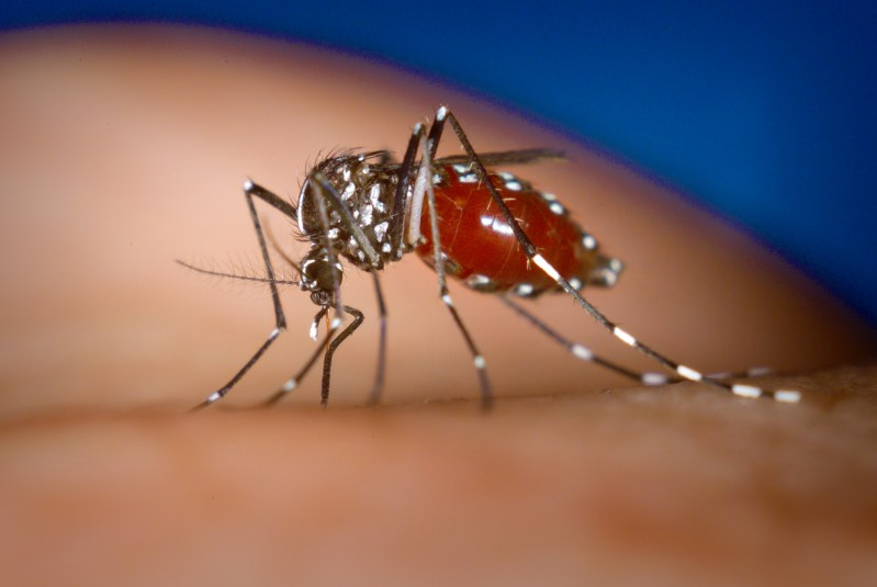 how to prevent mosquito diseases