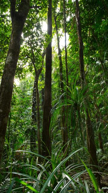This region includes territory belonging to nine nations. Daintree Rainforest Mossman Gorge Centre