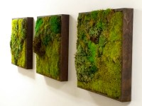 Moss Wall Art  by Plant Solutions, a living wall designer