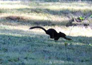 squirrel-8-medium-web-view
