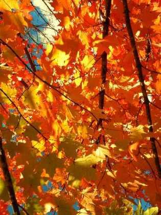 wisconsin-autumn-090-medium-web-view