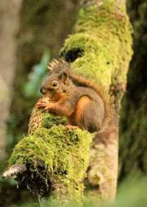 squirrely-1-medium-web-view