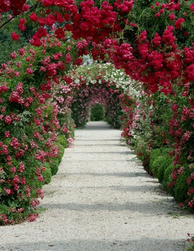 beautiful gardens 22
