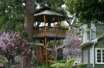 Beautiful Tree House Designs