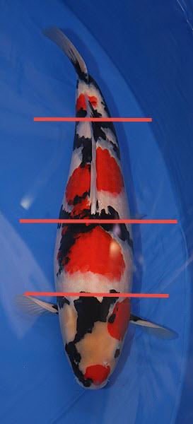 Delad i tre delar för att förklara just tre färger i tre lika delar.