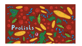 Protists: Microbes of New York