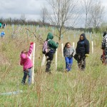 Volunteers Needed at Seedling Saturdays To Help Save Local Forests